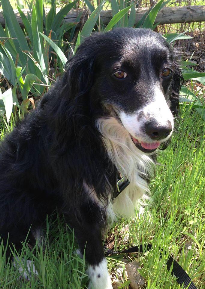 Petsmart Okc Dog Adoption