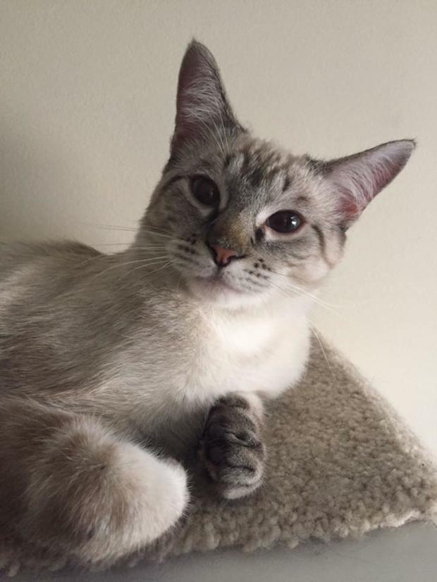 Petsmart Adoption Event – Yukon